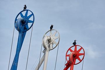 Birds in the harbor