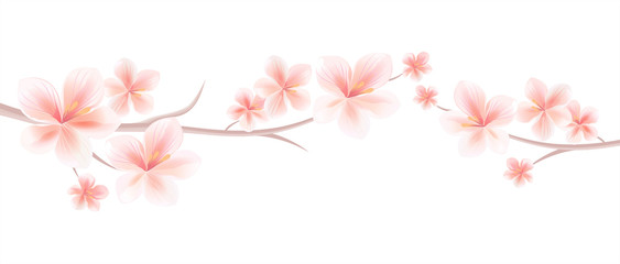 Branches of Sakura with Light Pink flowers isolated on White background. Sakura flowers. Cherry blossom. Vector