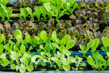 Young vegetables growing on water tray in control system, hydroponics