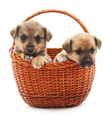 Two puppies in a basket.