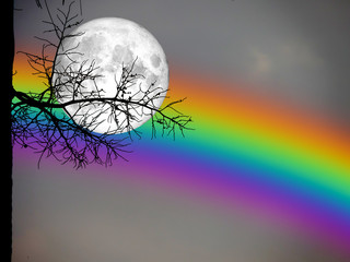 full moon and rainbow back silhouette dry palm tree in night sky
