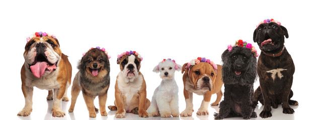 excited group of dog friends wearing flowers crowns