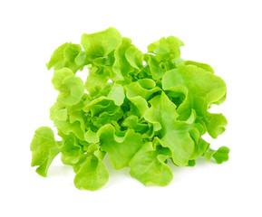 Green oak lettuce on white background