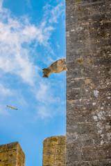 Vue sur les remparts de Aigues-Mortes