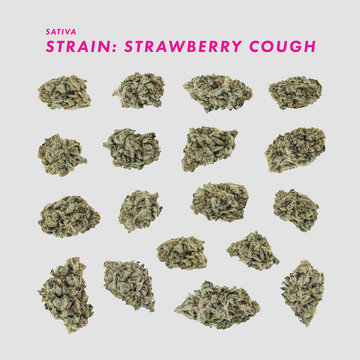 Strawberry Cough Sativa - Medical Marijuana Cannabis Buds isolated
