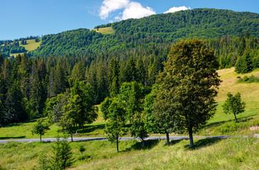road through forest on hillside. lovely transportation background
