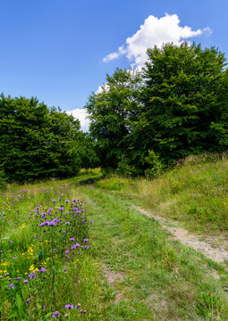 wide path through meadow in to the forest