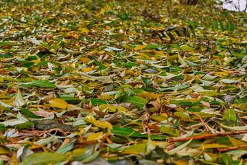 Ковер из листьев