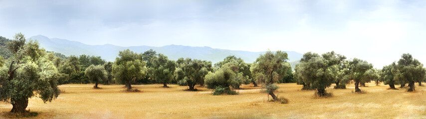 Panoramic view of Olive Farm. Wall mural