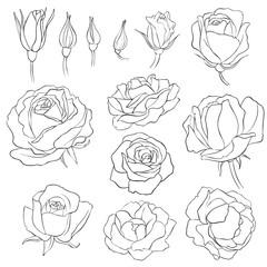 flowers, vintage vector floral set