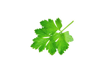 Parsley or petersilie on white background
