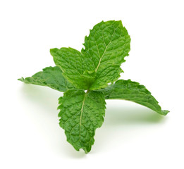 mint leaf isolated on a white background.