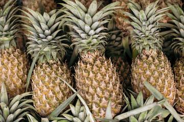 Pineapple background. Thailand, Phuket.