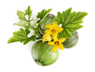 zucchini, flowers and leaves isolated on white background