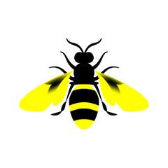 Golden honey bee uterus on white background.