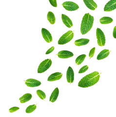 Fresh mint leaves falling in the air isolated on white background.  Set of peppermint, close up.