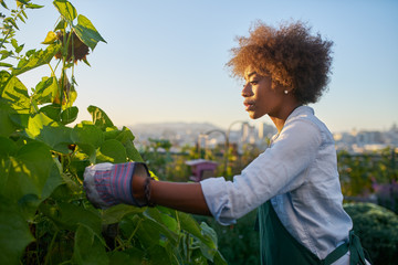 african american woman tending to crops in communal urban garden