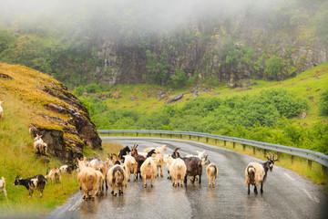 Many goats walking on street