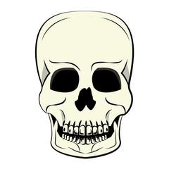 Human skull cartoon vector illustration graphic design