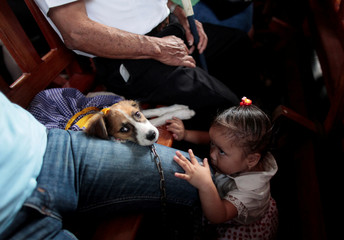 A girl plays with her dog during a mass in honor of Saint Lazarus in the indigenous community of Monimbo in Masaya