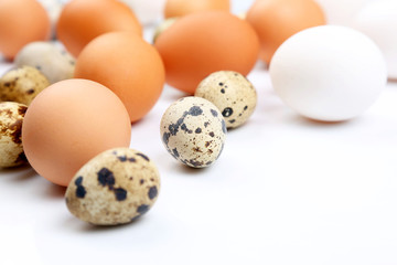 different quail and chicken eggs lie on white background.