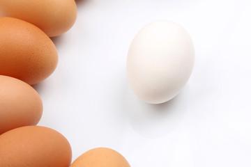 chicken eggs on white background.