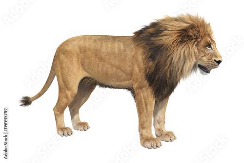 Lion animal big majestic hunter. 3D rendering