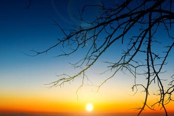 tree branch silhouette on beautiful twilight sunrise sky background