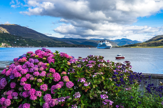 Beuatiful purple hortensia in Ullapool with Loch Broom on the background, Scotland, Britain