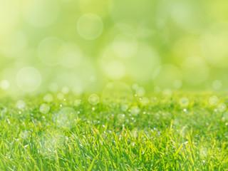 Fresh green grass lawn spring background