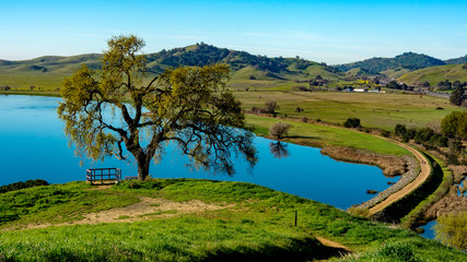 Lagoon Valley Park Vacaville California USA featuring lake overview from hill lone oak tree and blue sky