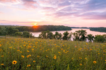 Minnesota Wild Flowers and Lake