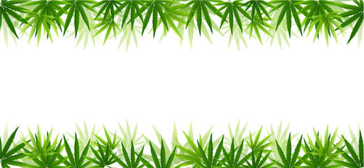 Frame formed with hemp (marijuana) leaves isolated on white.