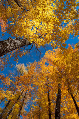 Fall trees in a park in the Upper Peninsula of Michigan
