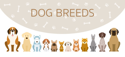 Group of Dog Breeds Illustration, Front View in a Row with Background, Pet