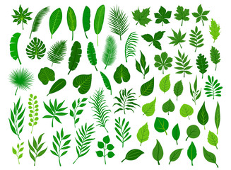 collection set of different green tropical, forest, park tree leaves branches twigs plants foliage herbs Fotoväggar