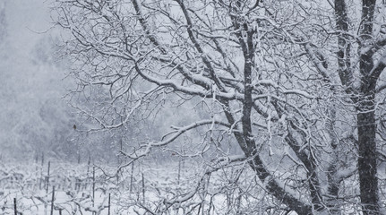 arbre neige froid paysage