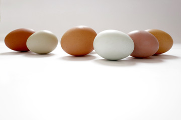 row of diverse eggs