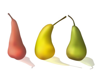 Set of colorful pears. Fresh fruit. Vector illustration. Dietary food