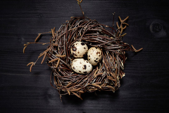 Quail eggs in nest on rustic wooden background, copy space. Healthy food concept. Top view, flat lay. Easter eggs. Happy Easter concept