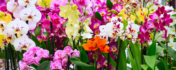 Variety of many different orchid flowers banner background