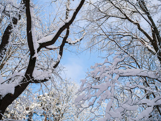 Photo of snowy trees in forest and blue sky