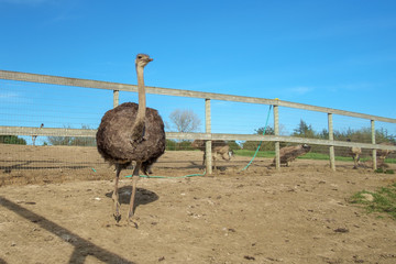 Bird at an Ostrich Farm