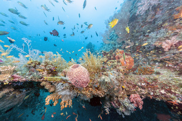 Deurstickers Onder water Coral reef off coast of Bali