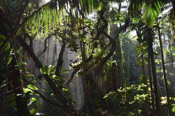 Papiers peints Gris traffic Forêt tropicale