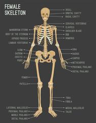 Female Skeleton Image