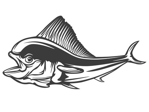 Mahi-mahi fishing on white logo illustration. illustration can be used for creating logo and emblem for fishing clubs, prints, web and other crafts.