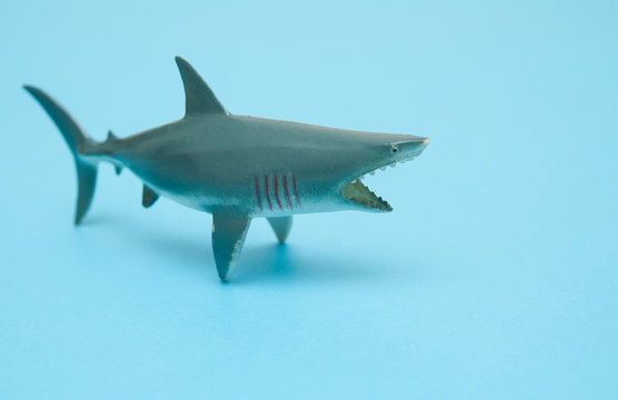 Shark toy on blue background.