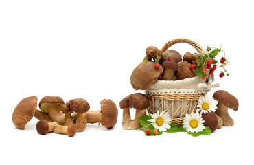 wild mushrooms, strawberries and chamomile on a white background