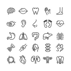 Human Organs Black Thin Line Icon Set. Vector